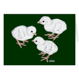 白いギニーKeets カード