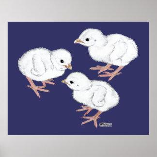 白いギニーKeets ポスター