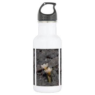 白いクロッカス ウォーターボトル