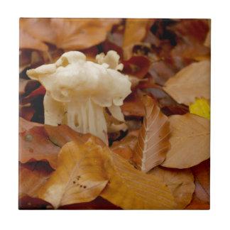 白いサドルの小妖精のサドルの公有地のhelvel タイル
