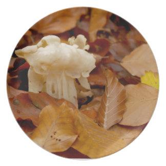 白いサドルの小妖精のサドルの公有地のhelvel プレート