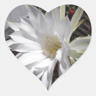 白いサボテンの花の開花 ハートシール