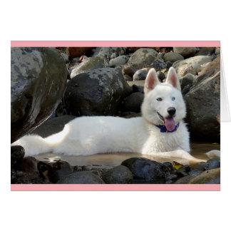 白いシベリアンハスキーの小犬のブランク カード