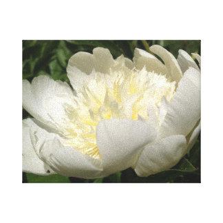 白いシャクヤクの花 キャンバスプリント