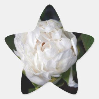 白いシャクヤク-花の写真- 星シール