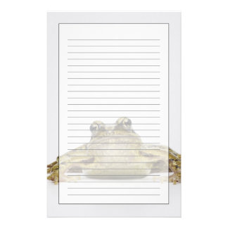 白いスタジオのカエルのポートレート 便箋