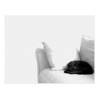 白いソファーの睡眠の灰色猫 はがき