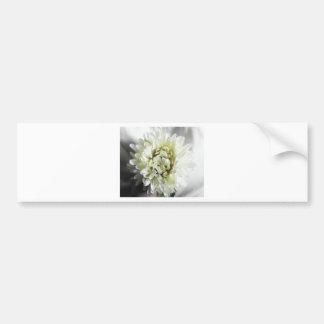 白いダリアの大きい花の写真の写真を離れて バンパーステッカー