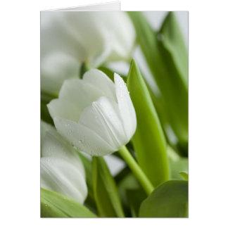 白いチューリップ カード