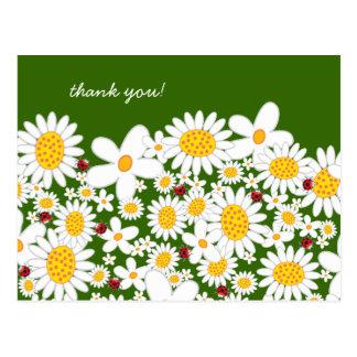 白いデイジーおよびてんとう虫は郵便はがき感謝していしています ポストカード