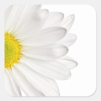 白いデイジーの花の背景によってカスタマイズデイジー スクエアシール