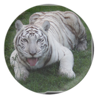 白いトラ1 11x11 プレート