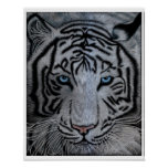 白いトラ-キャスパー ポスター