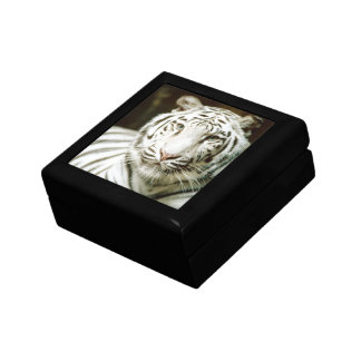 白いトラ ギフトボックス
