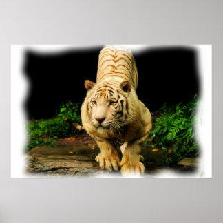 白いトラ ポスター