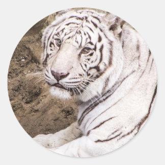 白いトラ ラウンドシール