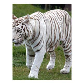 白いトラ レターヘッド