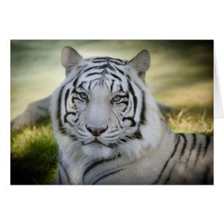 白いトラ(v2)の挨拶状は個人化なります グリーティングカード