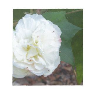 白いハイビスカスのmutabilisの花 ノートパッド