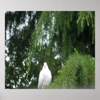 白いハトプリント ポスター
