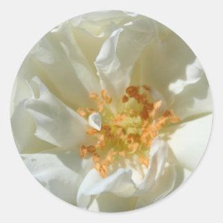 白いバラおよび太陽のステッカー ラウンドシール
