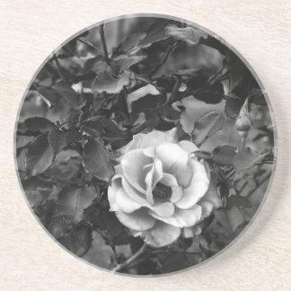 白いバラのコレクション ビバレッジコースター