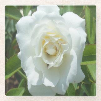 白いバラの写真の正方形ガラスのコースター ガラスコースター