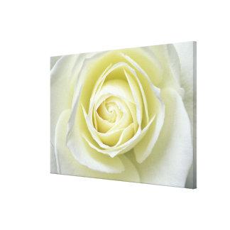 白いバラの詳細の上で閉めて下さい キャンバスプリント