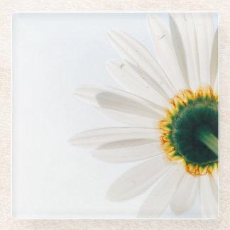 白いヒマワリ ガラスコースター