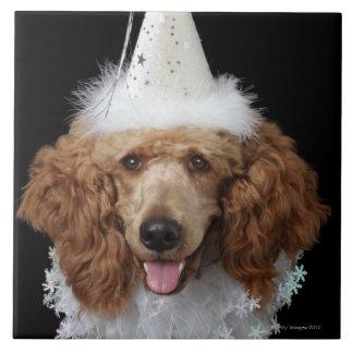 白いピエロの衣裳を身に着けている金プードル犬 タイル