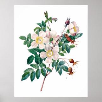 白いピンクのバラのヴィンテージポスター ポスター