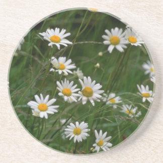 白いフランスギクの花 コースター