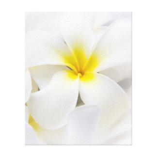 白いプルメリアの花のFrangipaniの花柄の花 キャンバスプリント