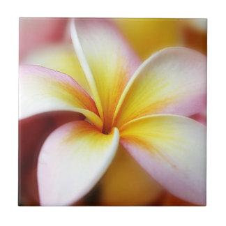 白いプルメリアのFrangipaniのハワイの花のハワイアン 正方形タイル小
