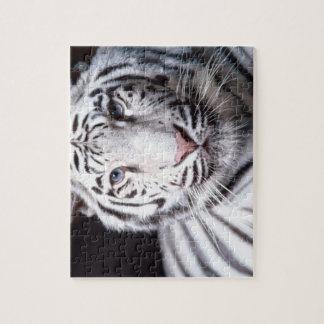 白いベンガルトラの写真撮影 ジグソーパズル