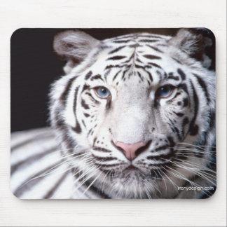 白いベンガルトラの写真撮影 マウスパッド