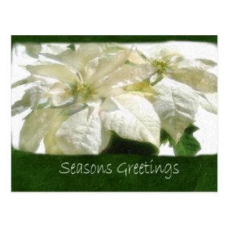白いポインセチア2 -季節のごあいさつ ポストカード