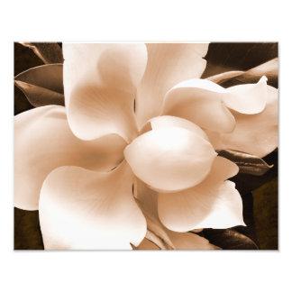 白いマグノリアの花のセピア色の黒の背景 フォトプリント