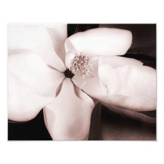 白いマグノリアの花の黒の背景の抽象芸術 フォトプリント