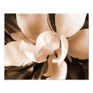 白いマグノリアの花の黒の背景 フォトプリント