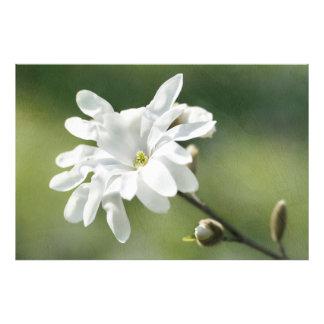 白いマグノリアの花 フォトプリント