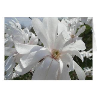 白いマグノリア、春 カード