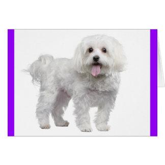 白いマルタの小犬: こんにちは、の愛恋しく思って下さい カード