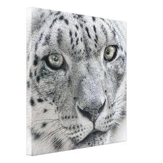 白いユキヒョウの自然の写真 キャンバスプリント