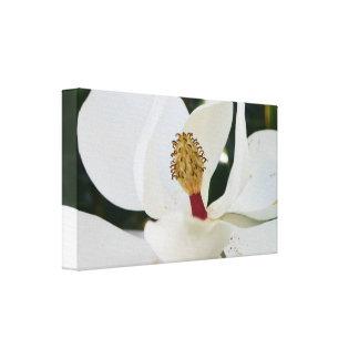 白い南マグノリアの花の花のキャンバス キャンバスプリント