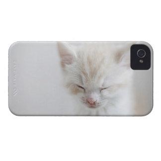 白い子ネコの睡眠 Case-Mate iPhone 4 ケース