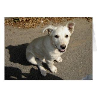白い子犬 カード