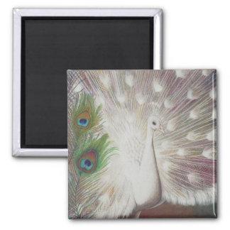 白い孔雀および緑の孔雀の羽の芸術は印刷します マグネット