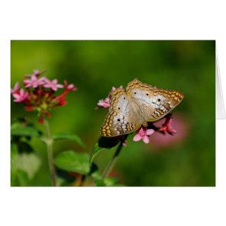 白い孔雀蝶 ノートカード