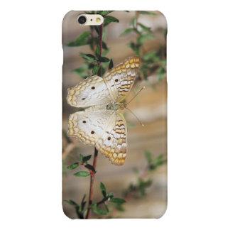 白い孔雀蝶iPhone 6のプラスの場合